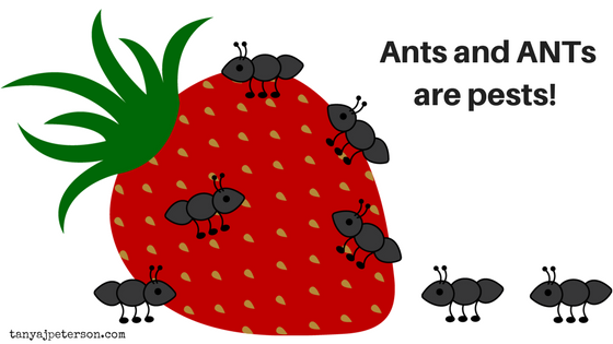 ANTs are automatic negative thoughts that pop into our mind. ANTs can ruin your picnic, your mental health and wellbeing. Learn more here.